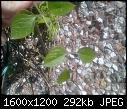 Is this a weed.... HELP!!!!-004.jpg