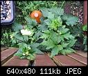 plant identification-2012-08-23_18_16_21.jpg