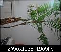Please help in identifing this plant-p.jpg