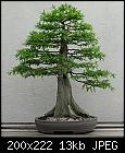 Check this-200px-bald_cypress-_1987-2007.jpg