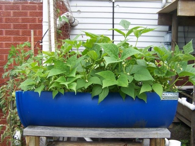 Aquaponic Gardening GardenBantercouk
