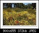 Wildflowers-Perth-4977-b-4977-perth-19-10-08-40-85.jpg