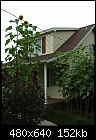 Giant Sunflowers-botts14ft_house_pa_8_14_04.jpg