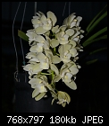 Cymbidium orchid-cym-sarahjeanicecapades-1080.1-02805.jpg