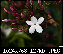 Little white flower-little-white-flower.jpg