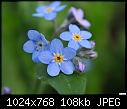 -tiny-blue-flowers-2.jpg