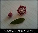 Identification-photo-15.jpg