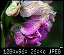 -unknown-tree-flower.jpg