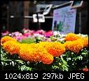 Color at the garden shop today 7-armstrongs-028.jpg