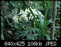 GH Mum - DSC_5063ab.jpg (1/1)-dsc_5063ab.jpg