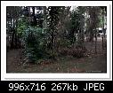 Fish Pond Project-6510-c-6510-pondbefore-01-10-12-40-20.jpg