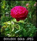 -rose_austin_othello-4.jpg