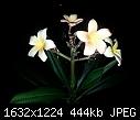 It finally bloomed - 20141011_085204.jpg (1/1)-20141011_085204.jpg