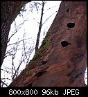 -woodpecker_holes.jpg