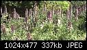 Acanthus en masse-acanthus-en-masse-01857.jpg