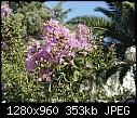 foca flowering trees 2015.07.25-foca-flowering-trees-2015.07.25.18.38.36.jpg