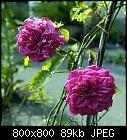 -rose_009_20160625.jpg