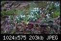 Snowdrop Valley-wp_20170222_11_58_09_pro.jpg