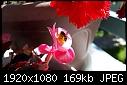 "who puts the 'b' in 'begonia""? 2017.05.20.09.37.00 - who puts the b in begonia 2017.05.20.09.37.00.jpg-who-puts-b-begonia-2017.05.20.09.37.00.jpg"