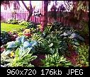 Lettuce - Lettuce 1a (Small).jpg (1/1)-garden..jpg