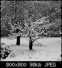 snowy trees-garden_20181213.jpg