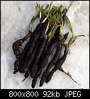 some serpent roots-scorzonera_hispanica_20191216.jpg