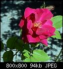 -rose_022_20200821.jpg