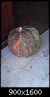 -tr-pumpkins-2020.10.03.10.44.36.jpg
