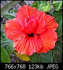 -390-hibiscus_766x768.jpg