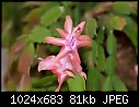 -thanksgiving-cactus_4486.jpg