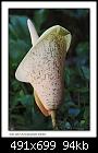 -b-9933a-snakeplant-13-11-06-30t.jpg