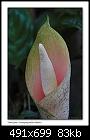 -b-9905a-snakeplant-12-11-06-30t.jpg