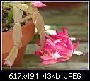 -epiphytic-cactus-2tonepinkdsc04018.jpg