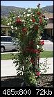 Red Roses - red-roses.jpg-red-roses.jpg
