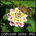Flower and Friend - File 1 of 4 - Flower and Friend P1000878.jpg (1/1)-flower-friend-p1000878.jpg