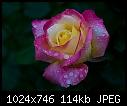 Love and Peace - 20081556.jpg-20081556.jpg