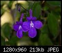 -tiny-purple-flowers-hanging-basket.jpg