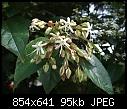 Identify small tree-tree1c.jpg