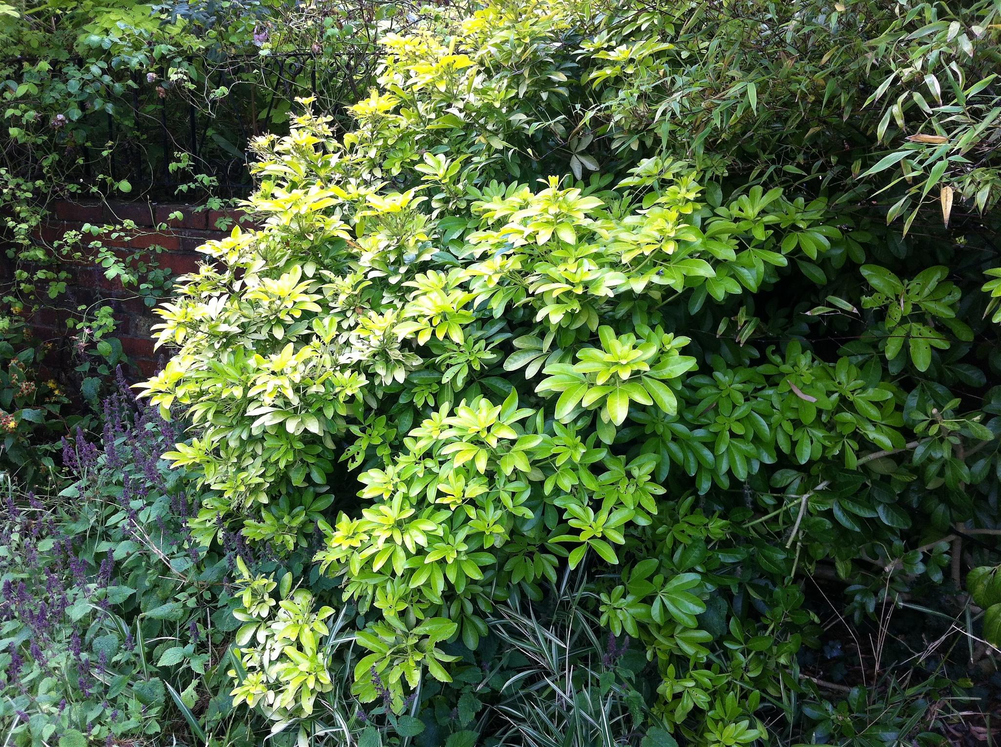 Simple plant identification appreciated for Landscape bush identification