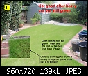 New Turf Lawn Dying? - Help please-badgrass_1.jpg
