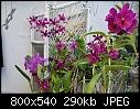 Purples on my Patio-patio-purple-passion-dsc02494.jpg