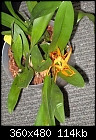 -unknown-orchid-004.jpg