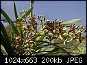 -ansellia-africana-162-03059.jpg