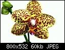 Phal. Salu Peoker-dsc_0001-18-medium-.jpg