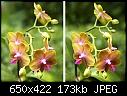 -phalaenopsis-xeye.jpg