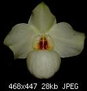 yellow Armeni White-armeniwhite2yellow.jpg
