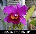 -blc-fredstuart-xcrispinrosales497-03782.jpg