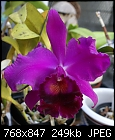 Cattleya Unknown-c-unknown-970-03785.jpg