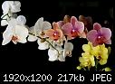 Orchid Images-svetik_orchid_flower.jpg