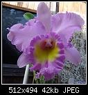 -blc-mahina-yahiro-ulii-am-aos1632-04027.jpg